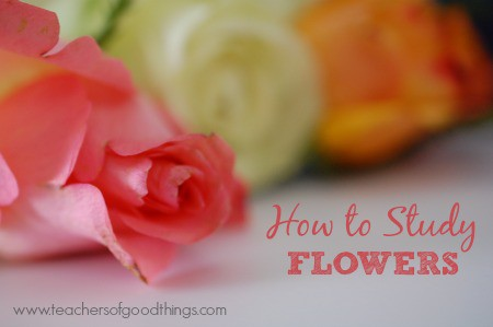 How to Study Flowers www.joyinthehome.com