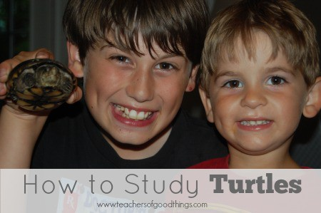 How to Study Turtles www.joyinthehome.com.jpg