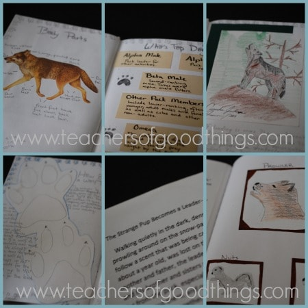 How to Turn Nature Studies into Books - wolf www.joyinthehome.com.jpg