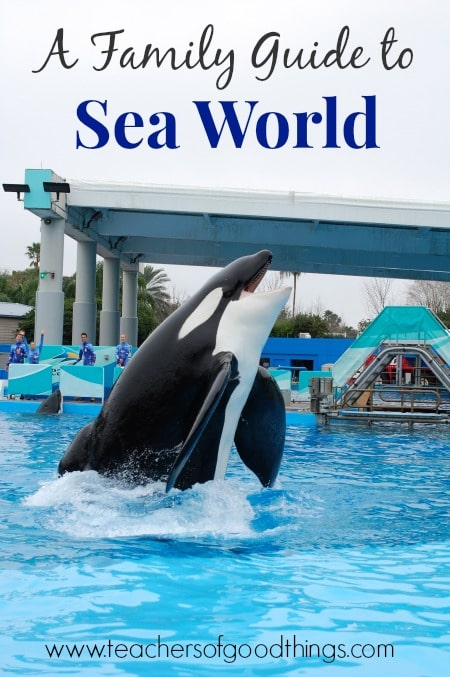 A Family Guide to Sea World